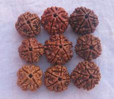 Pure Nepali 4,5,6 mukhi (Face) Rudraksh Rudraksha (9 pieces) + Red Thread