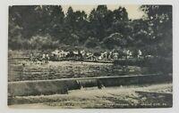 Postcard Swimming Bathing French Creek Dam Camp Innabah Spring City Pennsylvania