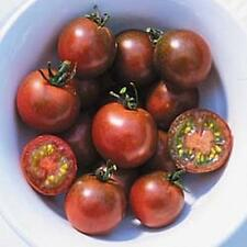 Brown Berry Tomato Seed - 25 Seeds