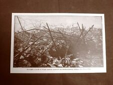 WW1 Prima guerra mondiale 1914-1918 Nova Villa 1916 Reticolati e cavalli Frisia