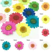 12Pcs Pressed Dried Natural Flower Epoxy Resin Nail Art DIY Craft Phone Decor