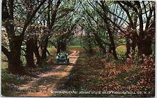 Postcard NY Parksville Willow Lane Beside State Road Through Sullivan County I4