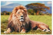 Male Lion, Mammal of Africa, Savanna, Big Cat, Mane --- Modern Animal Postcard