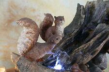 Zimmerbrunnen Springbrunnen Bachlauf LED Brunnen Eichhörnchen Holz Wald DW10-b