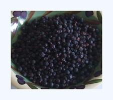 Juniper Berries 50g (Juniperus communis) 100% Natural, Non GMO, Free Post