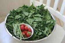 A 3g (approx. 30) New Zealand Spinach seeds TETRAGONIA EXPANSA rare Heirloom