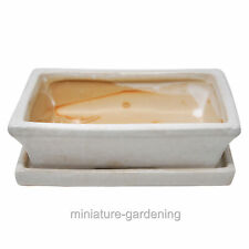 Bonsai Planter Rectangle with Saucer, 8-inches, Color Options