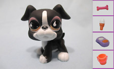 Littlest Pet Shop Dog Boxer 826 and Free Accessory Authentic Lps