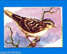 ANIMALI - Lampo 1964 - Figurina-Sticker n. 182 - ALLODOLA -New