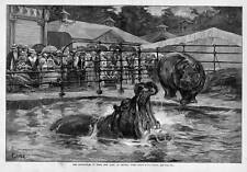 Hippopotomas In New Central Park Tank By F. S. Church 1888 Archives Of History