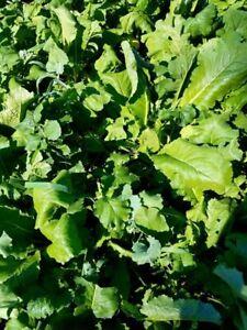 4 LB  BRASSICA DEER FOOD PLOT MIX - 3 species of brassicas - Seeds up to 1 acre