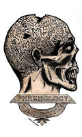 ZOMBIE Style PHRENOLOGY BRAINS FUNNY Humorous VINYL STICKER/DECAL By AGORABLES