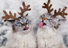 Reindeer Cats Catching Snowflakes Box of 10 Christmas Cards by Avanti Press