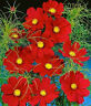 Red Cosmos Seeds, Dazzler, Heirloom Cosmos, Non-Gmo Seed, Draws Butterflies 50ct