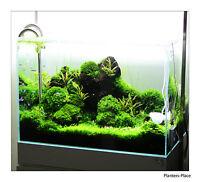 10 Portionen of 10 Verschiedene live aquarium Moose. Beste Qualität Guaranteed