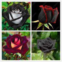 100 pcs/bag rare rose Black Rose Flower with Red Edge bonsai flower seeds For ho