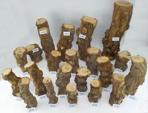 Seasoned English Burr Acacia (Robinia) woodturning or wood carving log blanks
