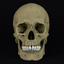 HUMAN FEMALE EUROPEAN ADULT SKULL REPLICA/ANTIQUE FINISH