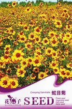 1 Pack 30 Creeping Sanvitalia Seeds Sanvitalia Procumbens Plain Coreopsis A226