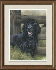 COCKER SPANIEL Black Cocker Spaniel fine art print by Lynn Paterson
