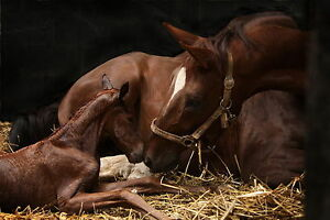 ClearOFF DEquine 800g Natural Horse Pony THRUSH LICE STABLE & MANGE MITE KILLER