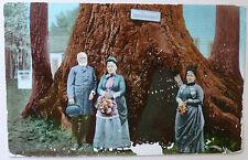 POSTCARD Gen'l Fremont, Sequoia, Redwood, Santa Cruz, CALIFORNIA USED