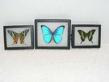EXOTIC BUTTERFLY & MOTH COLLECTION LOT OF 3 GUC