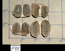 ☆☆ 4 Pack - Mazon Creek Fern Fossil Matched Pairs ☆ Pecopteris ☆☆