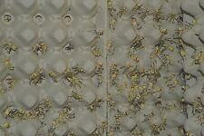 100 mittlere Heuschrecken / Wüstenheuschrecken / Futterinsekten für Reptilien