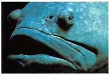 Zackenbarsch Fisch Grouper Fish Epinephelinae