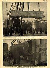 All' arrivo del gigante americano-circo di Barnum & Bailey ad Amburgo c.1900