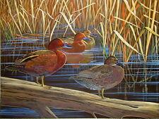 Cinnamon Teal Duck Art Print 11 x 14 by Doug Walpus Birds Signed Wall Decor