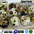 Fresh n Tasty Quail Eggs (6 dozen) with Quail Scissor