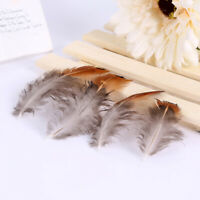 50pcs/set pheasant feathers 4-8cm chicken plumes for carnival diy craft deJWG
