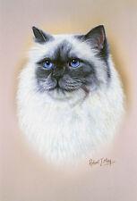 Birman Cat Head Study Print by Robert J. May