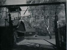 POLOGNE c. 1950 - 4 Photos de Lublin et Auschwitz - L 385