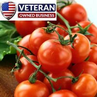 Tomato seeds 50+ Large red cherry Tomato Heirloom and Non-GMO Vegetable Seeds