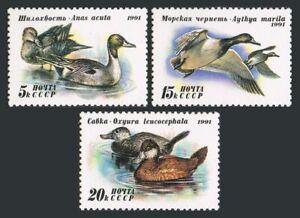 Russia 6009-6011 full sheets,MNH.Michel 6210-6212 bogens. Ducks-1991.Anas acuta