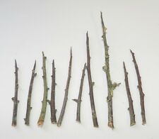10 Blackthorn thorns for spells protection magic witchcraft Wicca