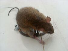 New Classic Mouse Traps Rat Strong Snap Catch Trap Adventure Outdoor Tools