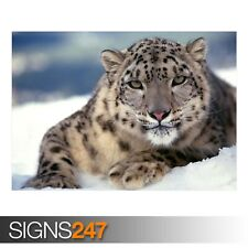 SCARY SNOW LEOPARD (3597) Animal Poster - Photo Poster Print Art A0 A1 A2 A3 A4