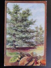 BEECH TREE by C.T.Howard - Old Postcard by J. Salmon No.3511