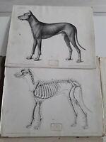 Livre1940/16 planches anatomie canine HUND/ecole des arts industriels de GENEVE