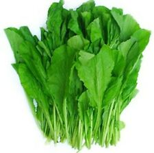 Vegetable chinese Mustard Green ,Gai Choy seeds,cai be xanh,1 OZ=13000 seeds