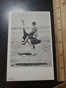 1900s RPPC Man Riding Ostrich Cawston Farm South Pasadena Ca