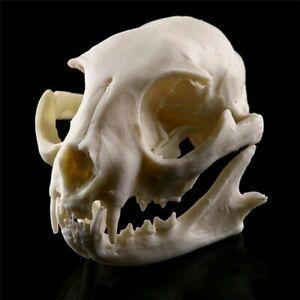 Realistic Cat Skull Resin Replica Decora Home Supplies Horrible Props Halloween