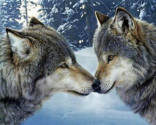 Greeting Wolves Canvas Stretched Wall Art Poster Print Wolf kiss animal dog