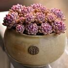 1*60pcs Succulents Rare Mini Potted Flower Seeds Home Office Decoratives 10# WY@