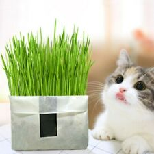 Cat Grass Soilless Culture Growing Kit Cats Stomach Hairball Control Planter