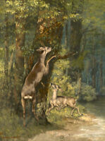 Deer in the Forest Gustave Courbet Fine Art Print on Canvas HQ Giclee Small 8x10